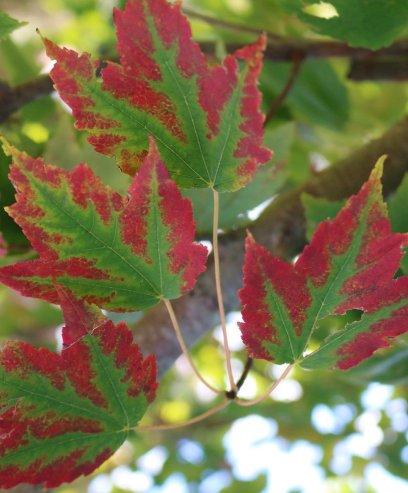 redgreenleaf