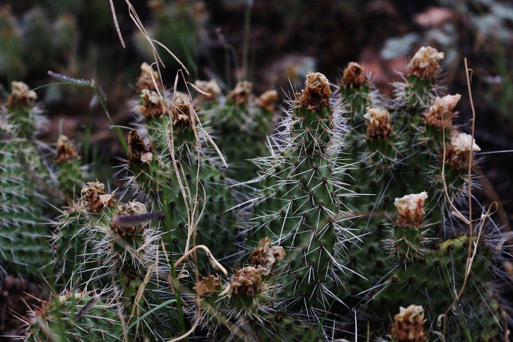 more_cactus